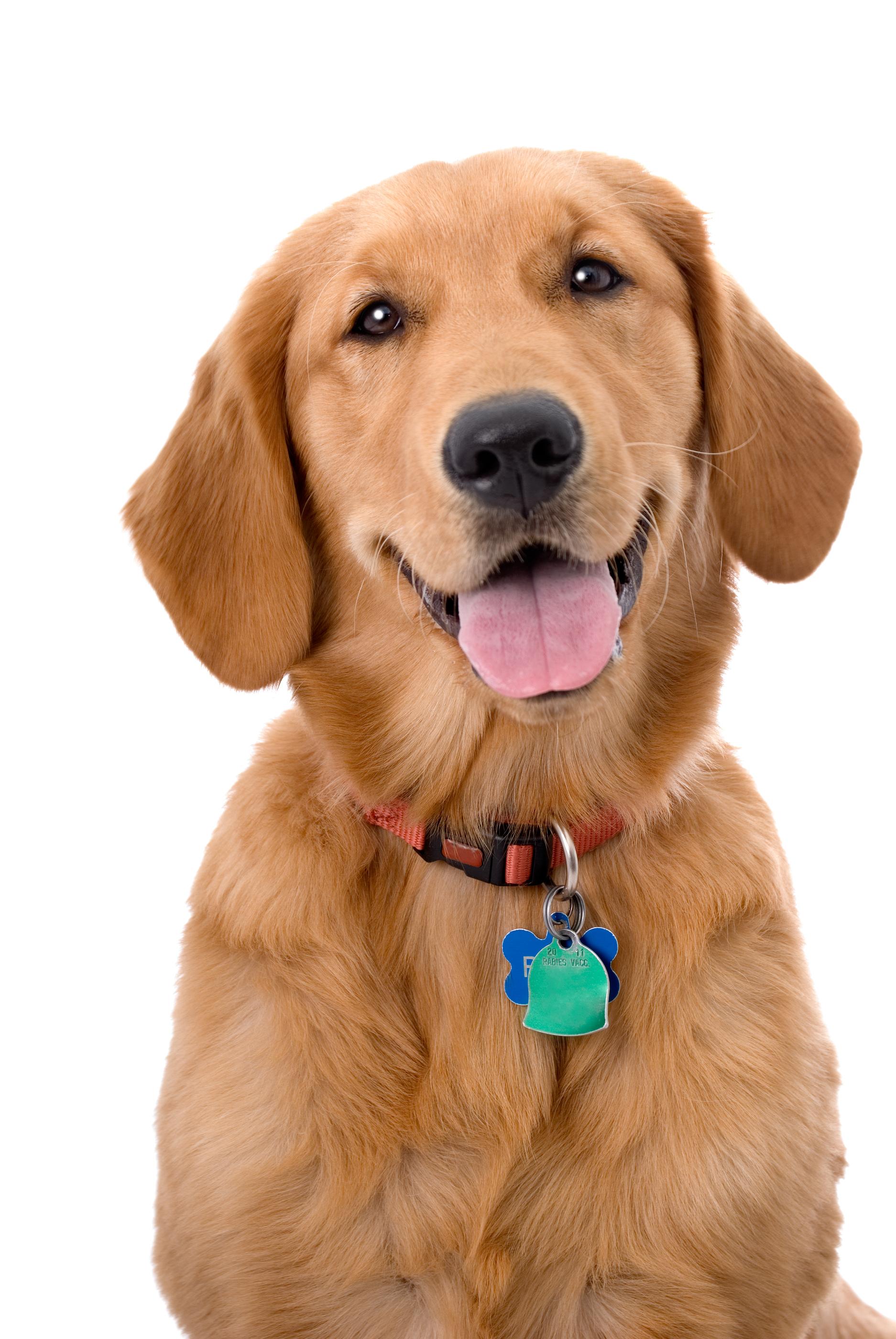 Puppy-Collars-21.jpg