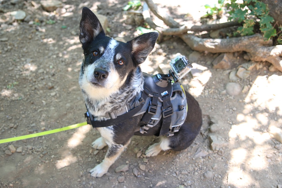 Dog-Pet-Harness.jpg